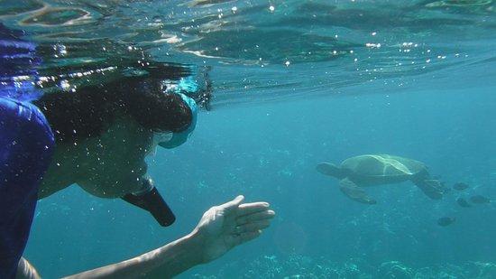 Po Olenalena Beach Snorkeling