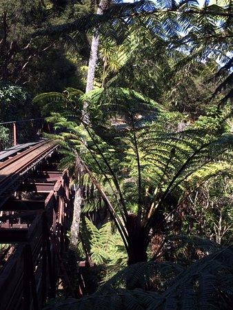 Coromandel, New Zealand: Travelling through native bush