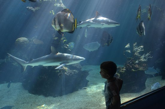 Aquarium des Lagons Nouvelle Caledonie: Shark