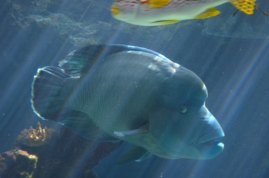 Aquarium des Lagons Nouvelle Caledonie: Big fish