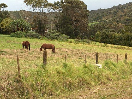 เกาะไวเฮเก, นิวซีแลนด์: photo3.jpg