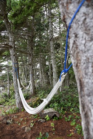 Telegraph Cove, Canadá: Hammocks at the campsite!
