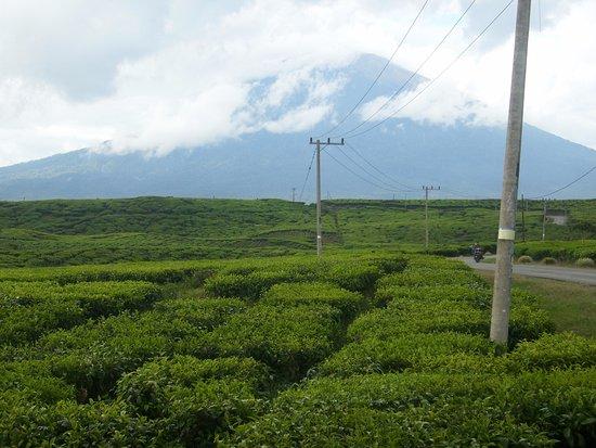 Jambi, Indonesia: Gunung Kerinci dilihat dari Kebun Teh Kayu aro