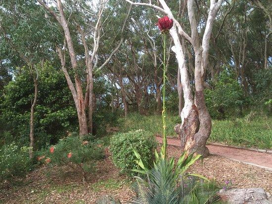 Fingal Bay, ออสเตรเลีย: photo1.jpg