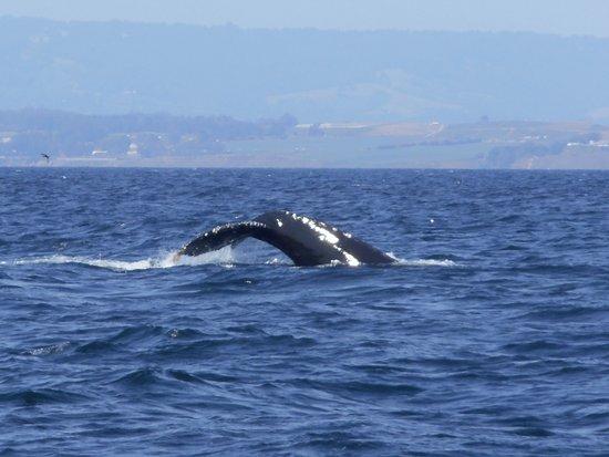 Sanctuary Cruises: Beautiful Whale.