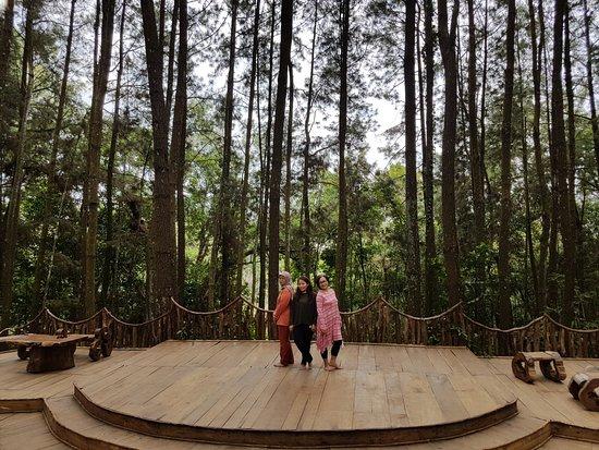 Hutan Pinus Imogiri - Picture of Imogiri Pine Forest, Imogiri - TripAdvisor