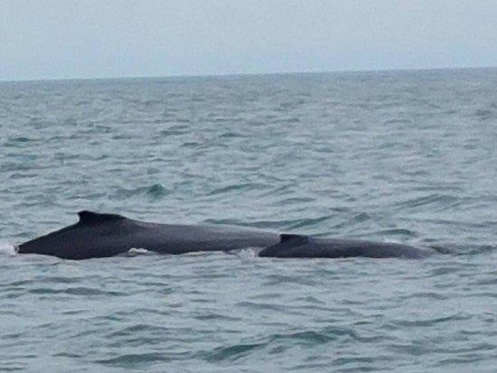 Magnetic Island, Australia: Humpback whale