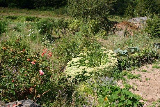 Wildersbach, Frankreich: Un écrin de verdure fleuri La Perheux