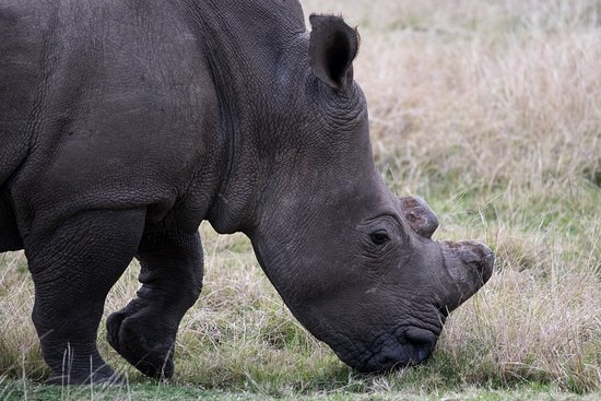 Plettenberg Bay Game Reserve, South Africa: Rhino