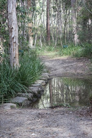 Mount Cotton, Australien: Stepping stones
