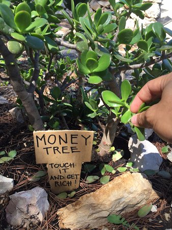 Hvar Island, Kroatien: Money Tree, toccalo!