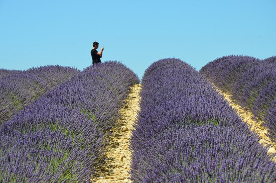 Trets, France: A Valensole