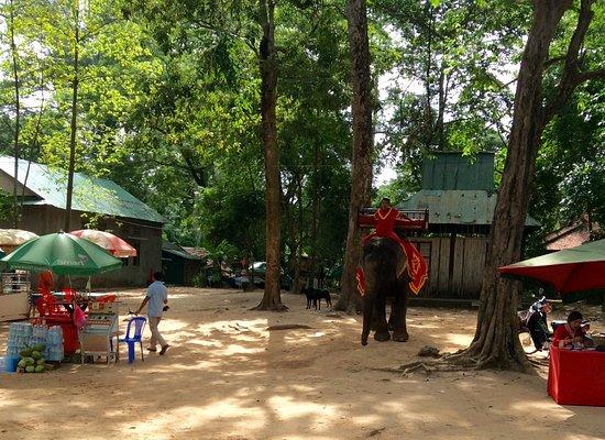 Angkor Thom : 象に乗って回るツアー