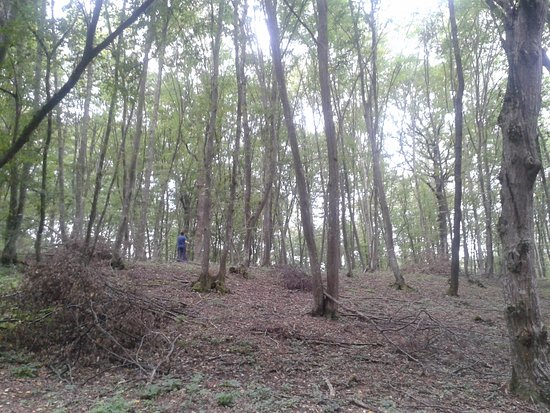Hoia Baciu Forest: Bosque