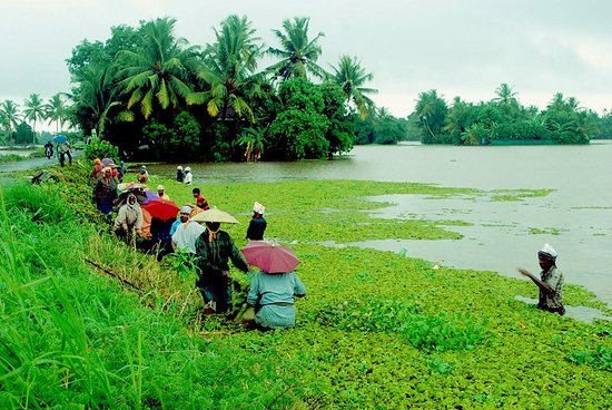 Kuttanad, India: Punnamada Lake & Surroundings