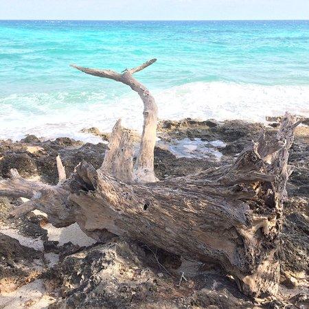 Chumbe Island Coral Park: photo0.jpg