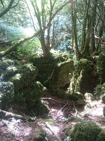 Coleford, UK: Puzzlewood