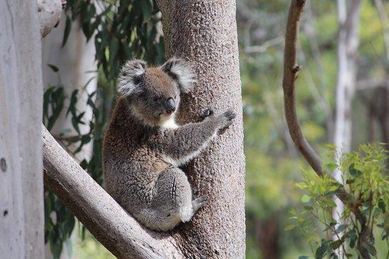 Yanchep, Australia: photo2.jpg