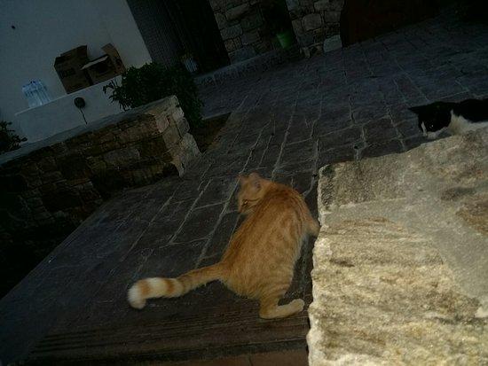 Agia Anna, Grekland: 20160823_190412_large.jpg