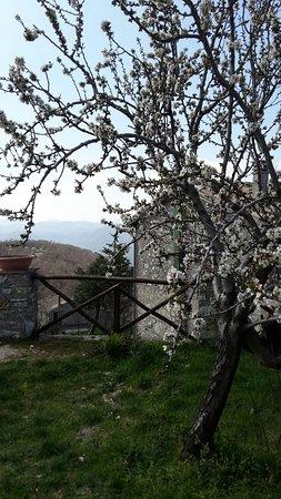 Agriturismo Bartoli: 20160326_121810_large.jpg