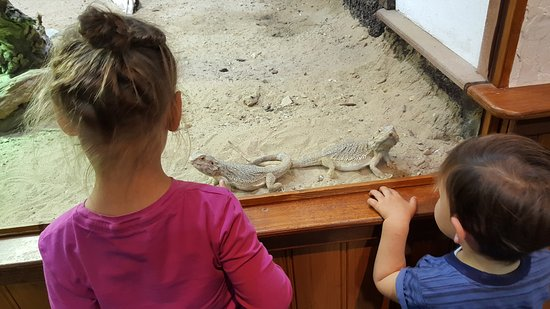 Amersfoort Zoo: Lots of interesting animals