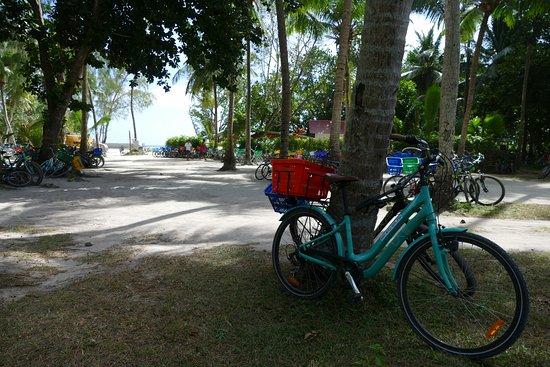 Praslin Island-billede