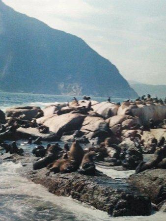 Rondebosch, Republika Południowej Afryki: 902034_474268249311824_1003773_large.jpg