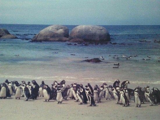 Rondebosch, Republika Południowej Afryki: 902049_474268092645173_1007918_large.jpg