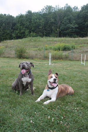West Rutland, VT: Dog park at Paw House