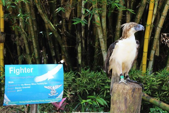 Davao City, Filippinerne: Philippine Eagle Centre