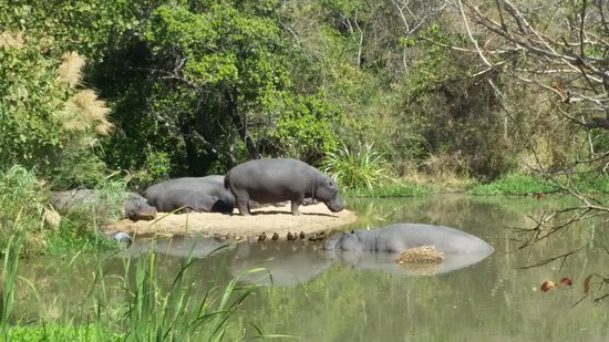 Kruger Park Lodge: Hippo hide