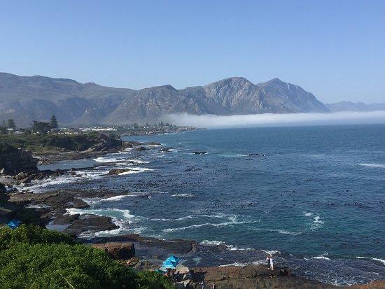 Hermanus, Sydafrika: photo4.jpg