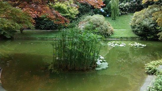 Laghetto con pesci rossi foto di i giardini di villa for Riproduzione pesci rossi in laghetto