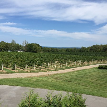 Vineland Estates Winery Restaurant: View from the patio
