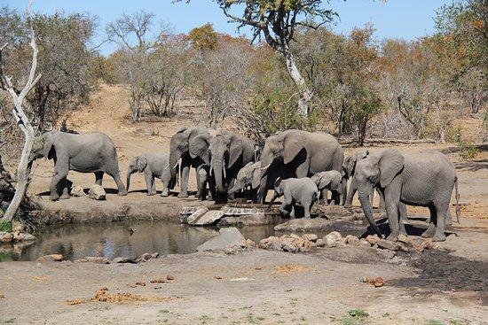 Klaserie Private Game Reserve, Sydafrika: photo0.jpg