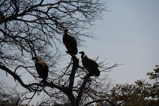 Klaserie Private Game Reserve, Afrika Selatan: photo2.jpg