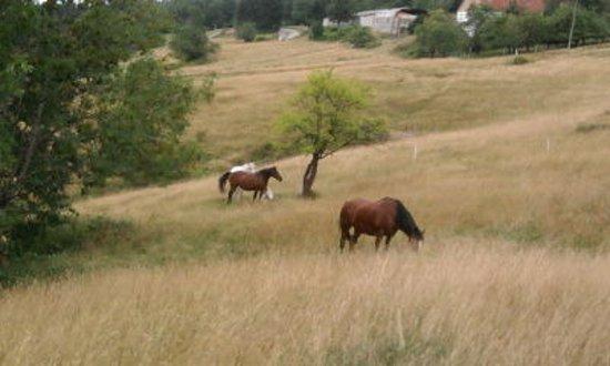 Lorraine, França: Fraize