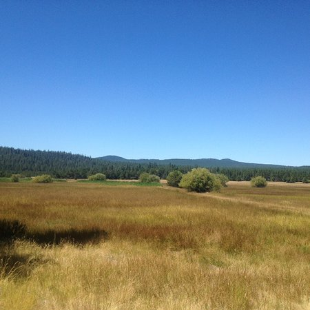 View of the meadow from the Sunriver Nature Center