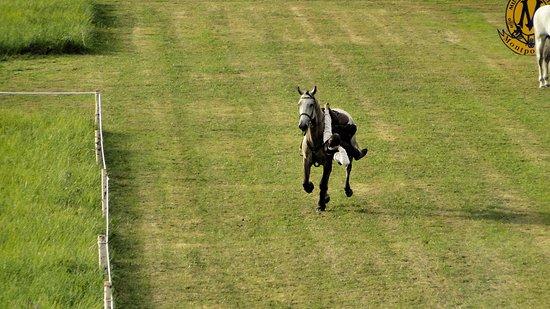 Cere La Ronde, فرنسا: Spectacle de chevaux