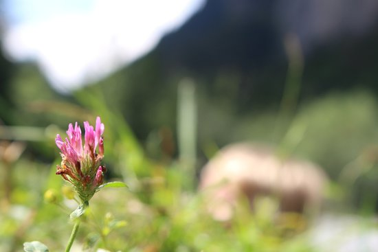 Le Cirque du Fer a Cheval: Wild flowers