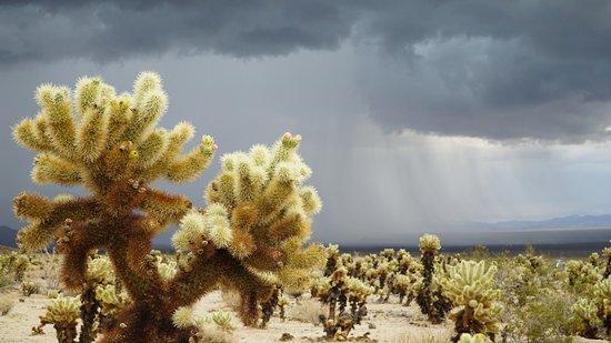 Twentynine Palms, CA: Сад кактусов. Дождь приближается!