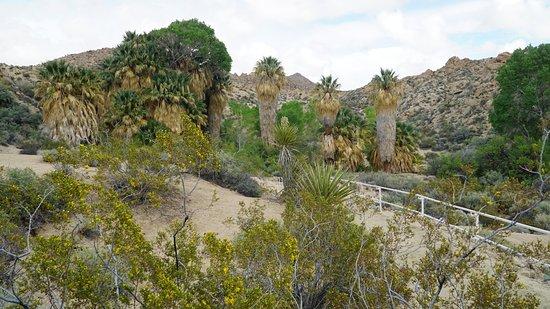 Twentynine Palms, Californië: Есть свой оазис