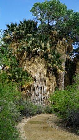 Twentynine Palms, Californië: Тропинка начинается здесь
