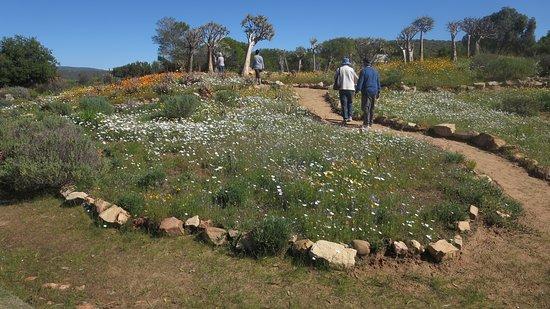 Vredendal, Zuid-Afrika: outside area