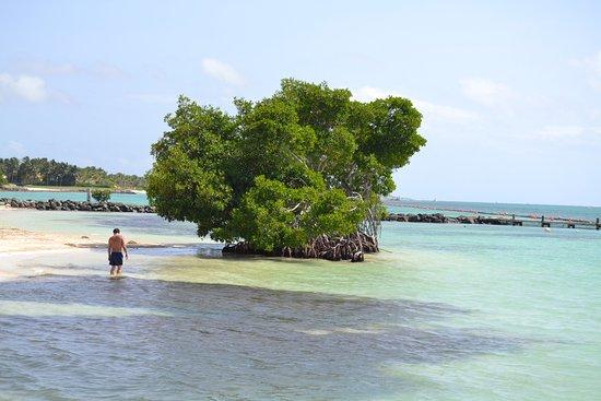 Puntacana Ecotours: The Punta Cana Resort
