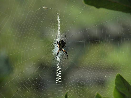Niles, MI: Spider