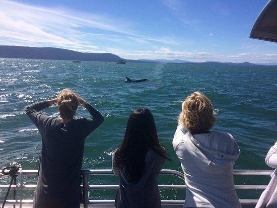 Friday Harbor, Etat de Washington : photo0.jpg