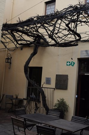 Ciudad del Cabo Central, Sudáfrica: Believed to be one of the original grape vines in Capetown. See history below