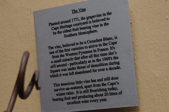Ciudad del Cabo Central, Sudáfrica: History of the vine above.