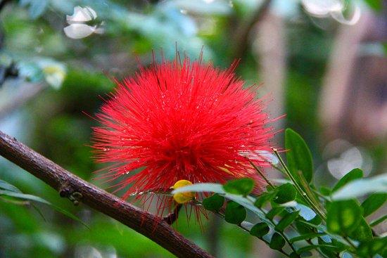 Victoria, Seychellen: Flower in the Botanical Garden on Mahe island